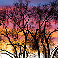 Colorful Silhouetted Trees 26 by James BO  Insogna