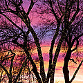 Colorful Silhouetted Trees 33 by James BO  Insogna
