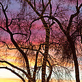 Colorful Silhouetted Trees 37 by James BO Insogna