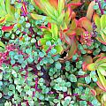 Colorful Succulent Plants For You by Carl Deaville
