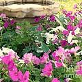 Colorful Summer Day by Margie Hyndman