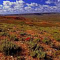 Colorful Valley From Fossil Lake Trailsil Bu by Rich Walter