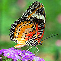Colorful Wing by Cheryl Cencich
