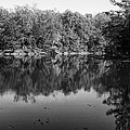Colorless Reflection by Wayne Stacy