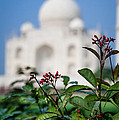 Colors Around The Taj Mahal by Anthony Torres