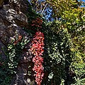 colors of Autumn by Bener Kavukcuoglu