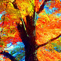 Colors Of Autumn by Stephen Younts