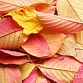 Colors Of Autumn by Susan Wall