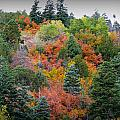 Colors Of The Sandia Forest by Aaron Burrows