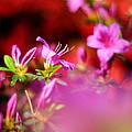 Colors by Rebecca Sherman