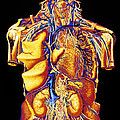 Colour Artwork Of Abdominal & Thoracic Nerves by Mehau Kulyk