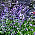 Colour Purple by Barbara Walsh