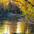Columbia Bottoms Slough II by Greg Matchick