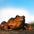 Common Frog by Gavin Macrae