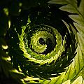Common Polypody Swirl by Jouko Lehto