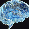 Computer Artwork Of A Wire-frame Model Of A Brain by Pasieka