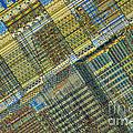 Computer Chip by Michael W. Davidson