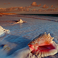 Conch Shell On Beach by Novastock and Photo Researchers