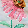 Coneflower - Watercolor by Heidi Smith