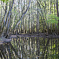 Congaree National Park by Pierre Leclerc Photography