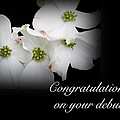Congratulations On Your Debut - White Dogwood Blossoms by Mother Nature