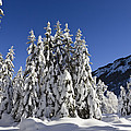 Coniferous Forest In Winter by Konrad Wothe