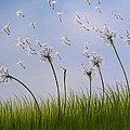 Contemporary Landscape Art Make A Wish By Amy Giacomelli by Amy Giacomelli
