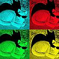 Cool Cat Pop Art by Aimee L Maher ALM GALLERY