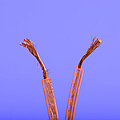 Copper Wire by Photo Researchers, Inc.