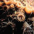 Coral Feeding 5 by Mike Nellums