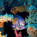 Coral Reef In Red Sea by M Bleichner