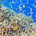 Coral Reef Panorama by MotHaiBaPhoto Prints