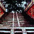 Coral Stairway by Bob Whitt
