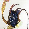 Coriolis by Mark  Schmiedeberg