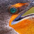 Cormorant Abstract by Bruce J Robinson