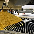 Corn At An Ethanol Processing Plant by David Nunuk