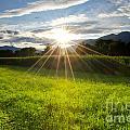 Corn Field In Backlight by Mats Silvan