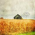 Corn Fields Of Kentucky by Darren Fisher