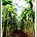 Corn by Kara Ray