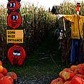 Corn Maze by LeeAnn McLaneGoetz McLaneGoetzStudioLLCcom