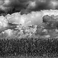 Cornfield And Clouds by Robert Ullmann
