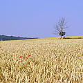 Cornfield With Poppies by John Chatterley