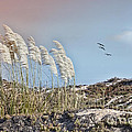 Coronado Island Pampas Grass by Betty LaRue