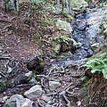 Corte Madera Creek On Mt Tamalpais by Ben Upham III