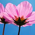 Cosmia Flowers Pair by Sumit Mehndiratta
