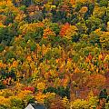 Cottage In Front Of Autumn Colours by John Sylvester