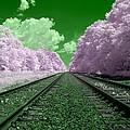 Cotton Candy Trees by Steve Gravano