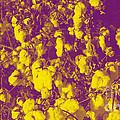 Cotton Golden Southwest by Feile Case