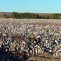 Cotton Landscape Protected 01 by Feile Case