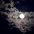 Cotton Moonlight by Maria Urso